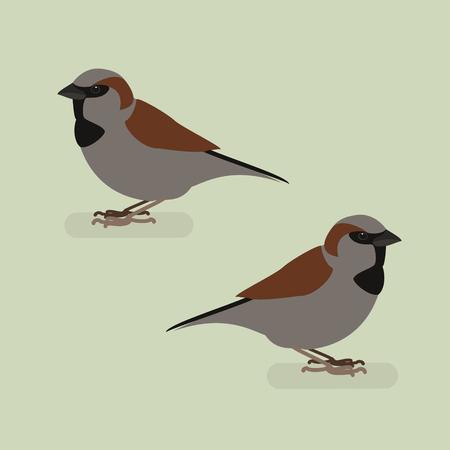 sparrow: Sparrow bird on a branch. Isolated vector illustration of a flat Illustration
