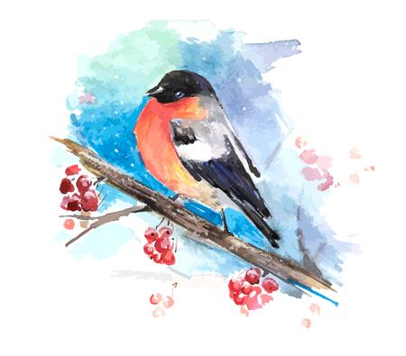 mountain ash: Bullfinch on the branch of mountain ash. Watercolor vector