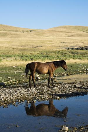 kazakhstan: Horses Kazakhstan Stock Photo