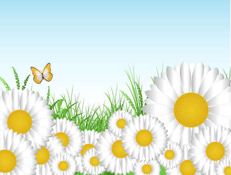 Daisies background