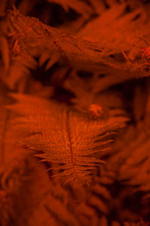 Red orange leafy background. Fern leaves pattern. Texture for screensavers and wallpapers. Red background