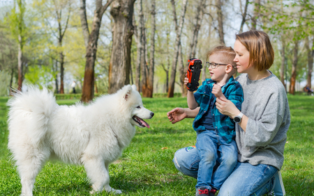 A little boy and his mom play with a fluffy Samoyed dog and in the park on the grass in spring Zdjęcie Seryjne