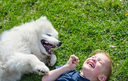 The boy laughs lying with a white dog in the park on the grass in spring. A little boy plays with a white samoyed dog on the grass and laughs. Zdjęcie Seryjne