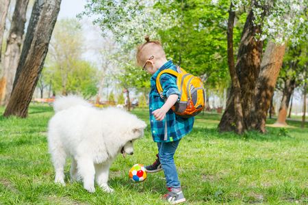 A little boy with glasses plays a ball with a white dog. A samoyed dog and a little hipster run through the park on the grass in spring