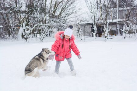 Little girl in a pink jacket playing with a Siberian husky breed dog (dog bites the her hand) in the winter in the snow