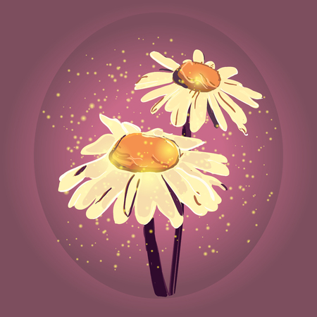chamomile: chamomile illustration. Hand drawn chamomile. Chamomile branch, Chamomile sketch. Chamomile with artistic abstract effect.