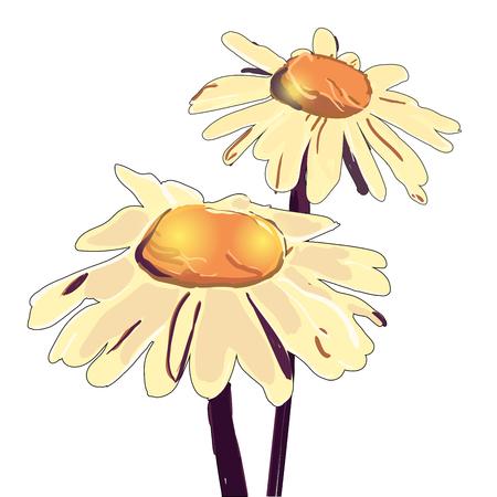 chamomile illustration. Hand drawn chamomile. Chamomile branch, Chamomile sketch. Chamomile with artistic abstract effect.