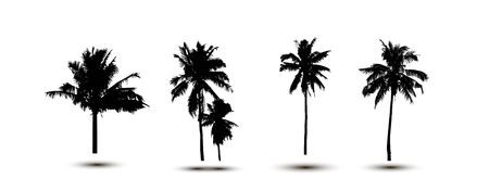 subtropical plants: Realistic SilhouetteTropical Coconut Palm Tree, black silhouettes and outline contours on white background. Vector
