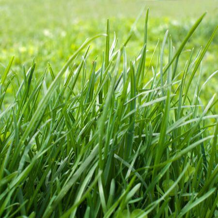 a green grass in the garden Stock Photo
