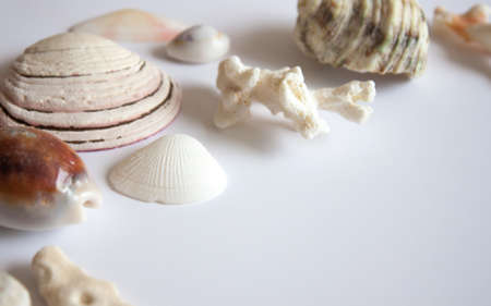 Sea shells, stones, mussels and corals on white background. Reklamní fotografie