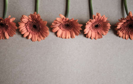 Pastel orange gerbera flowers on kraft paper background. Festive romantic concept.