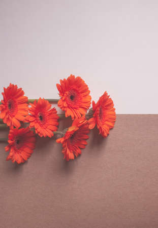 Orange gerbera flowers on white and Kraft paper background. Festive romantic concept. 写真素材