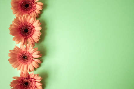 Orange gerbera flowers on mint green background. Festive romantic concept. 写真素材
