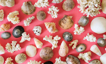 Different sea shells, mussels and corals pattern on pink orange background.  Stockfoto