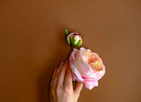 Pink artificial rose in womans hand on brown background. Flat lay style. Reklamní fotografie