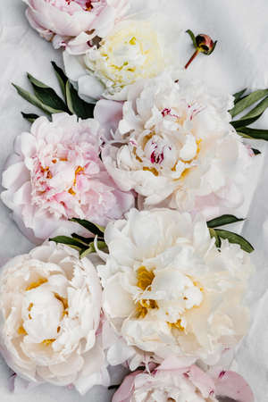 Beautiful pink and white peony flowers background.