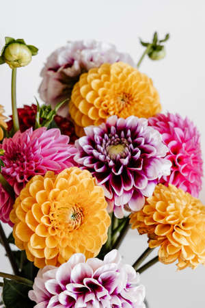 Beautiful colorful dahlia flowers pattern background. Festive concept. 免版税图像