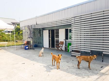 Pets at house front porch Фото со стока