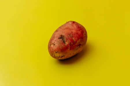 Strange ugly mutant red organic uneven potatoes with insect bites on a yellow background. Rejected food in stores shops concept. Poor quality food.