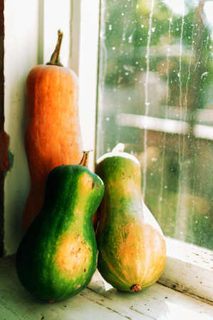Three green and orange pumpkins on a wooden windowsill. Beautiful autumn composition for Thanksgiving or Halloween. October harvest concept. Homeliness. Template for design. 版權商用圖片