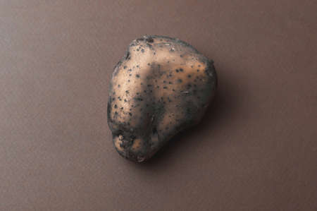 The odd, large, organic ugly mutant jagged potato with insect bites went bad and blackened against a black background. Rejected food in stores shops concept. Poor quality food.