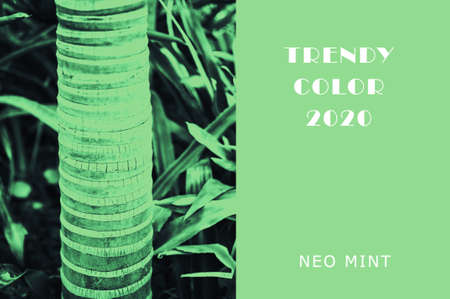 Plant in color Neo Mint. Juicy tones in a new mint color. Palm trunk. Abstract light green background with vibrant colors. Copy space. mockup for design Banco de Imagens