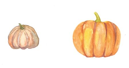 Pumpkin. Hand drawn watercolor painting on white background