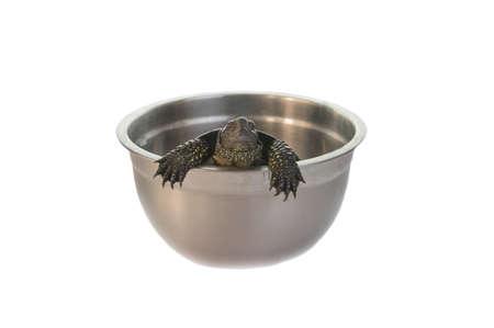 land turtle: Land turtle isolated on white Stock Photo