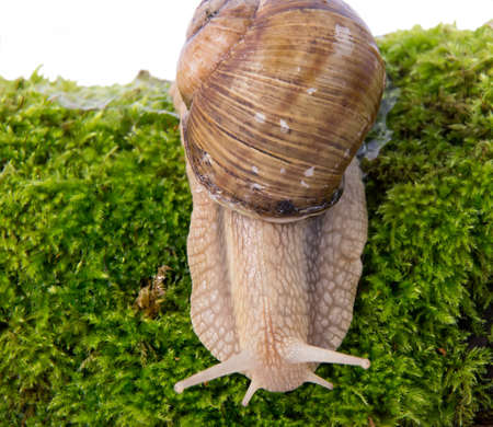 seen: Domestic snail can be seen in every garden, especially after rain.