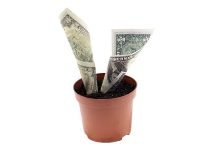 Growing money in flowerpots on wooden background Stock Photo