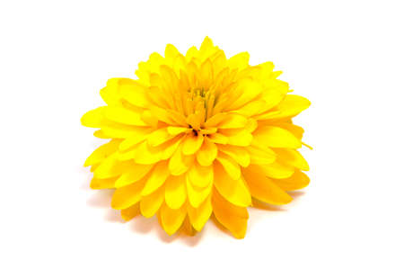 白い背景に長い茎の菊の花が絶縁されている 写真素材