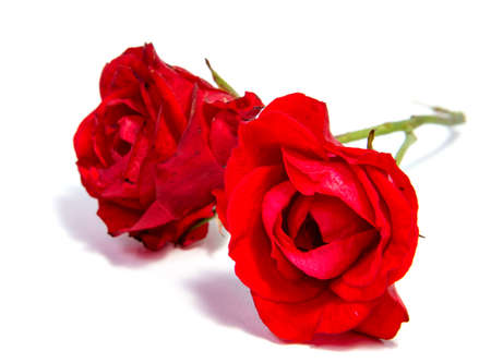 Red rose flower head isolated on white background  Stock Photo