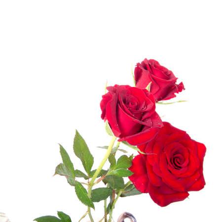 Delicate flower rose  isolated on white background Standard-Bild - 107352340