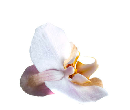 Orchid nature background. Nature background of orchid. flower nature background Standard-Bild