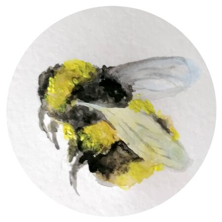bumblebee bee. drawn by hands, watercolor paints. fluffy, honey. in pollen