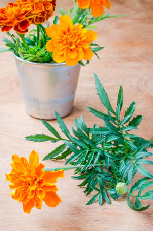floristic: Floristic background with marigold flower on wooden background, selective focus, rustic style.