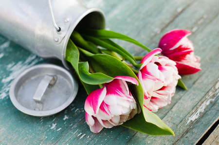 Cottage life, bouquet of tulips in an aluminum can on an old vintage wooden board. Stock Photo