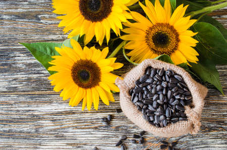 Raw sunflower seeds in burlap bag on a wooden table against the background and yellow sunflower. Fried grains of sunflower in ecological packaging.