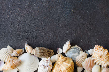 Different seashells on dark concrete background. Summer background. Summer vacation concept.