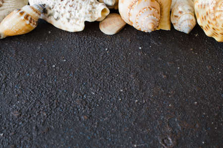 Different seashells on dark concrete background. Summer background. Summer vacation concept. Flat lay, top view. Copy space. Mock up.