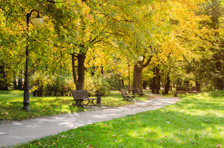 City park in autumn. Autumn Landscape. Beautiful autumn park at sunny weather. 写真素材