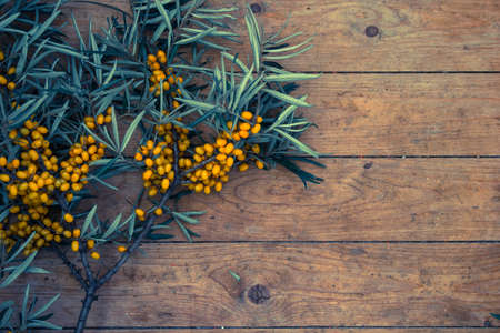 argousier: ripe yellow sea-buckthorn berries on wooden background
