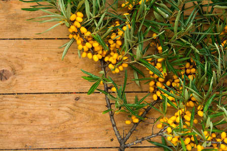 seabuckthorn: ripe yellow sea-buckthorn berries on wooden background