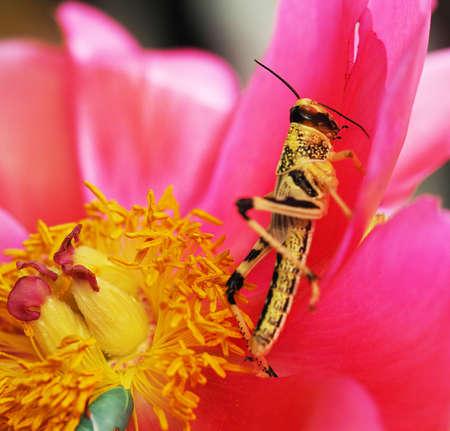 the locust pest closeup on the sheet