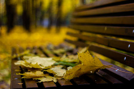 autumn yellow leaves lying on a wooden bench