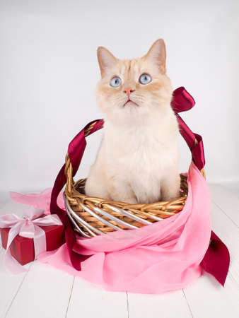 white red cat in a basket, with blue eyes as a gift, Easter cat