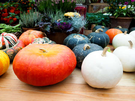 Pumpkin arrangement for sale, Autumn still life with pumpkins on wooden background. Banque d'images
