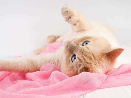 cat playing, on a wooden background with a pink scarf, concept tenderness, care. Stockfoto