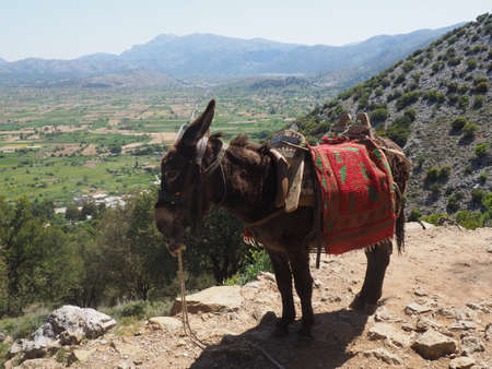 A donkey standing on a rock on a mountain trail, while a group of people with big backpacks are hiking
