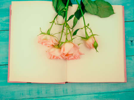 Pink rose flower on the book , Valentines day concept